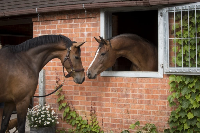 Horses greeting each other